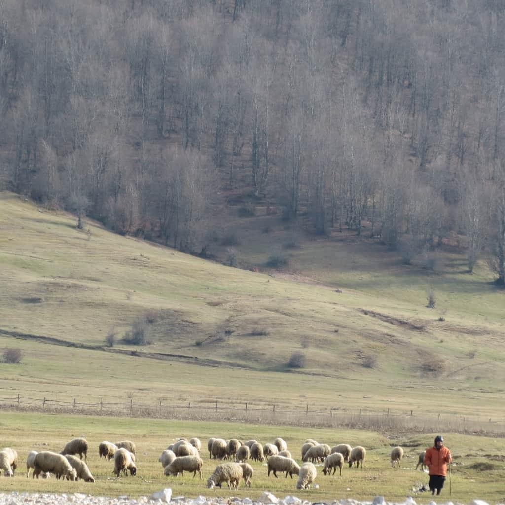 Flock of sheep with shepherd | photo: Shebenik-Jabllanicë National Park