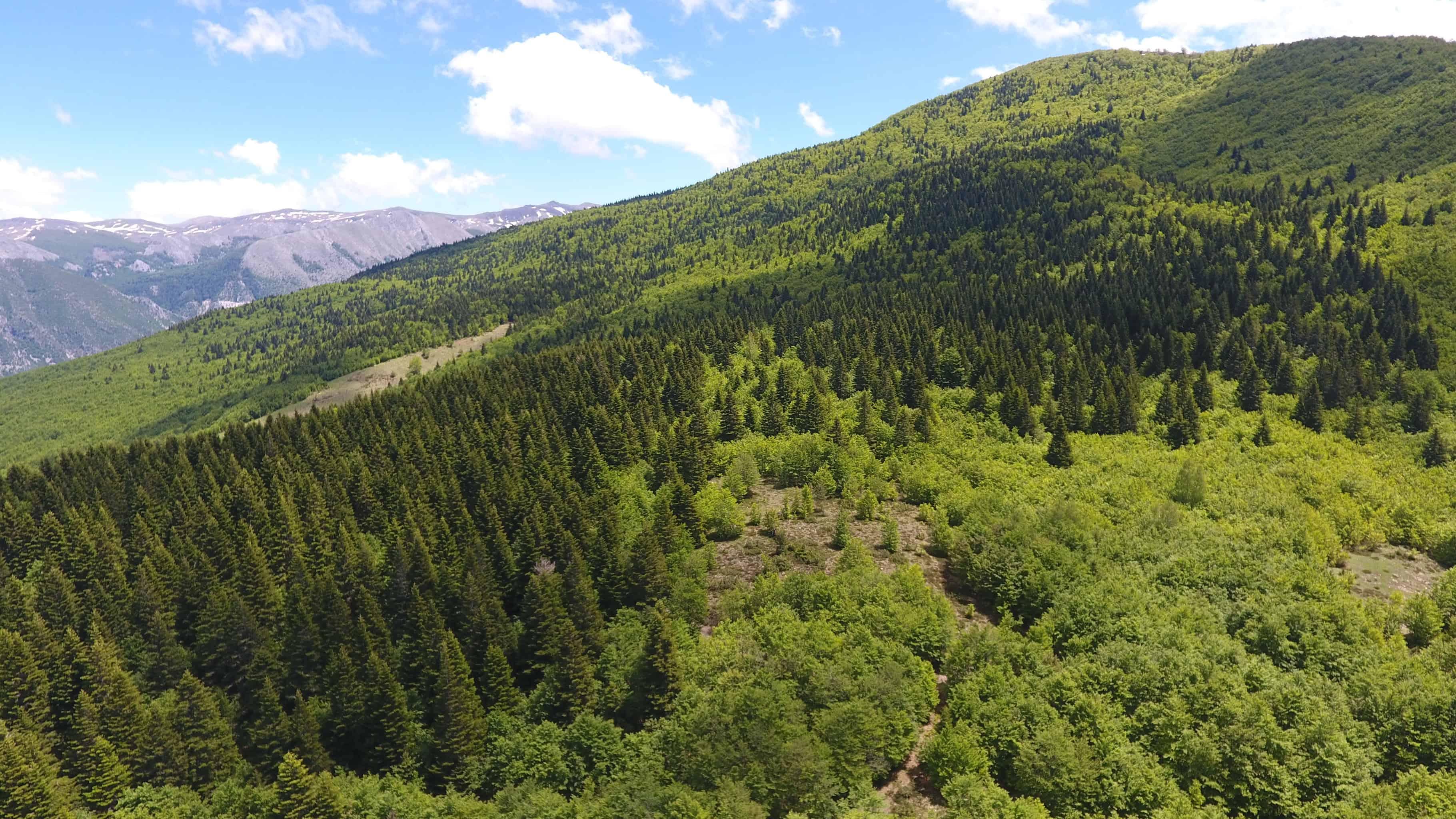 Qarrishte   photo: Shebenik-Jabllanicë National Park
