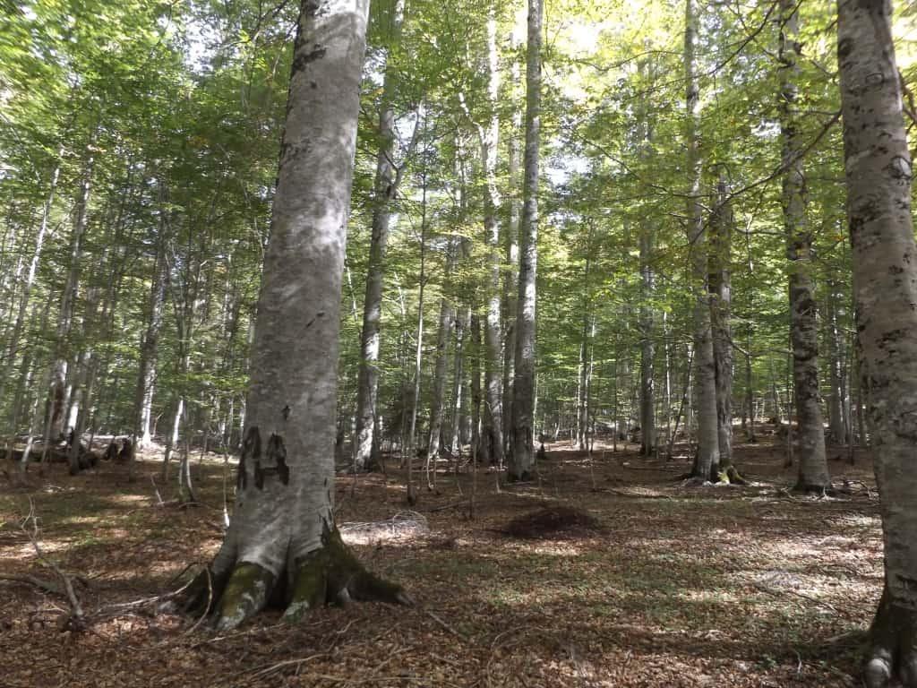 Rrajca forests (UNESCO World Heritage Site) | photo: Shebenik-Jabllanicë National Park